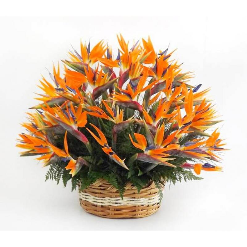 Floral 144